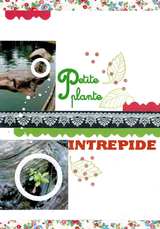 Petite plante page collimage bourgeon creatif