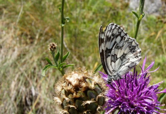 Papillon Bourgeon Créatif