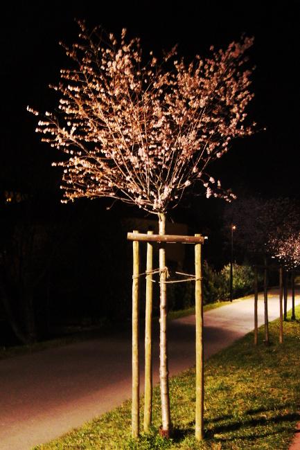 Bourgeon créatif semaine 11 arbre