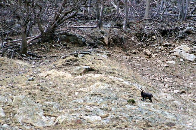 Bourgeon créatif faune sauvage1