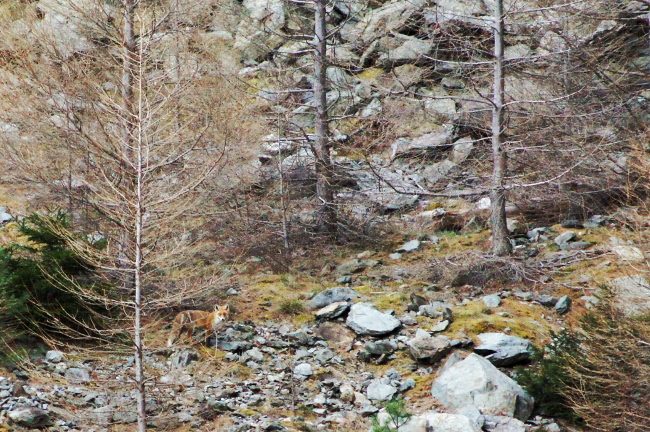 Bourgeon créatif faune sauvage2