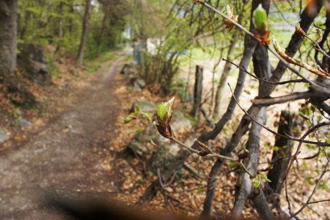 R_Bourgeon de feuilles