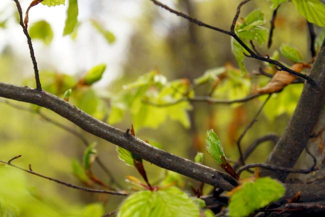 R_Bourgeon de feuilles3