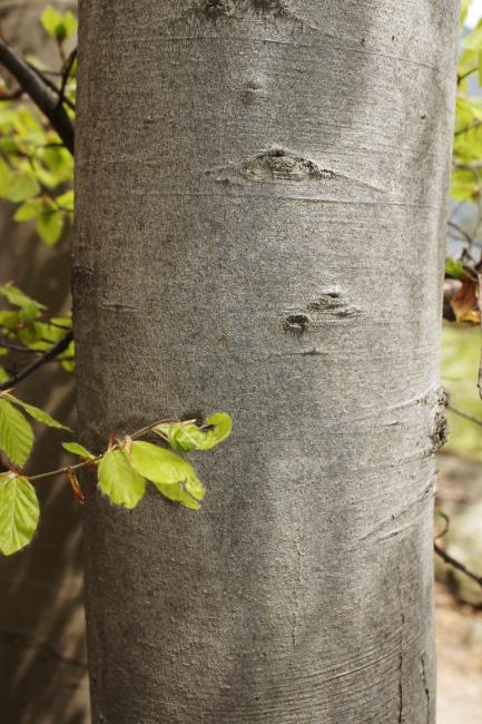 R_Ecorce et feuilles