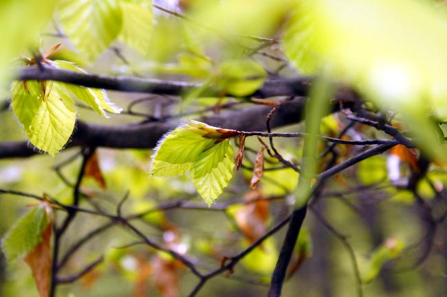 R_Petites feuilles